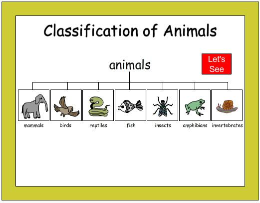 classification of animals science skills online. Black Bedroom Furniture Sets. Home Design Ideas
